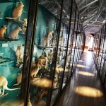 Inside Tring Museum Galleries. Exhibitions, learning and family fun. See listings in The Vine Magazine