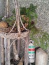 A standing rustic basket I have had for years is filled with pine cones and decorative spheres all year round. A few fresh evergreens are added in winter. The nest (to the left), which is just about the best decoration a gardening girl could ask for, was left to me by Mrs. Robin. Yes, she did raise her young right here in this basket by the front door! I have not moved the nest.