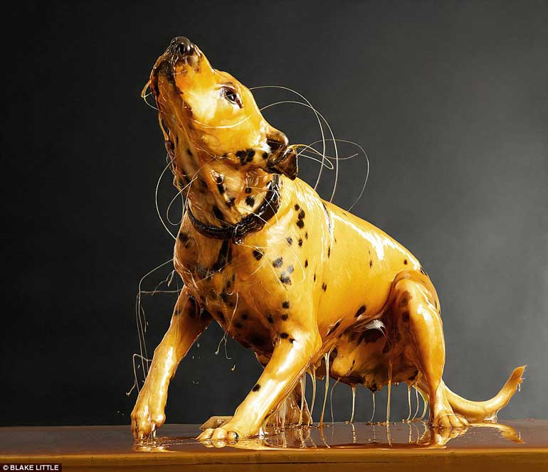 dog-photograpny-moxie-honey-covered