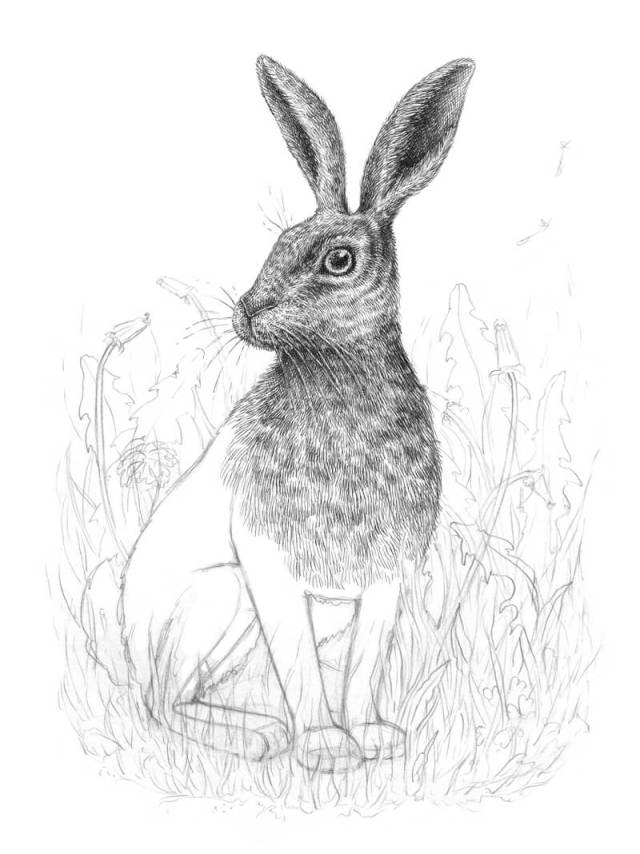 Drawing fur on the chest of the rabbit