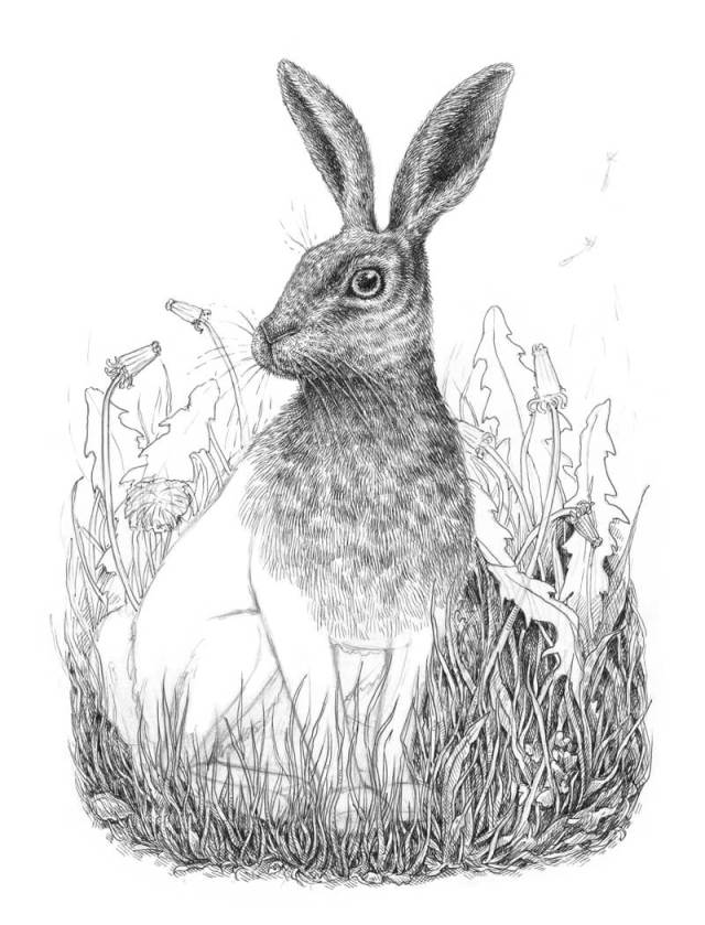 Drawing grass in the background behind the rabbit