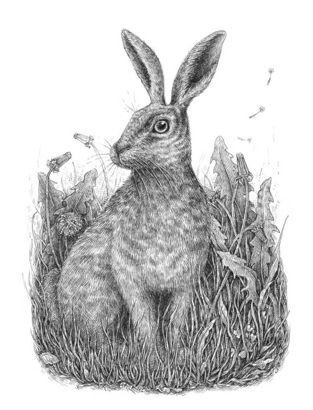 Pen and ink drawing of a rabbit