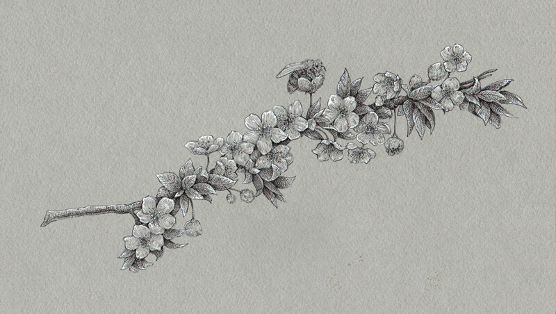 Drawing Flowers With Black And White Ink On Toned Paper