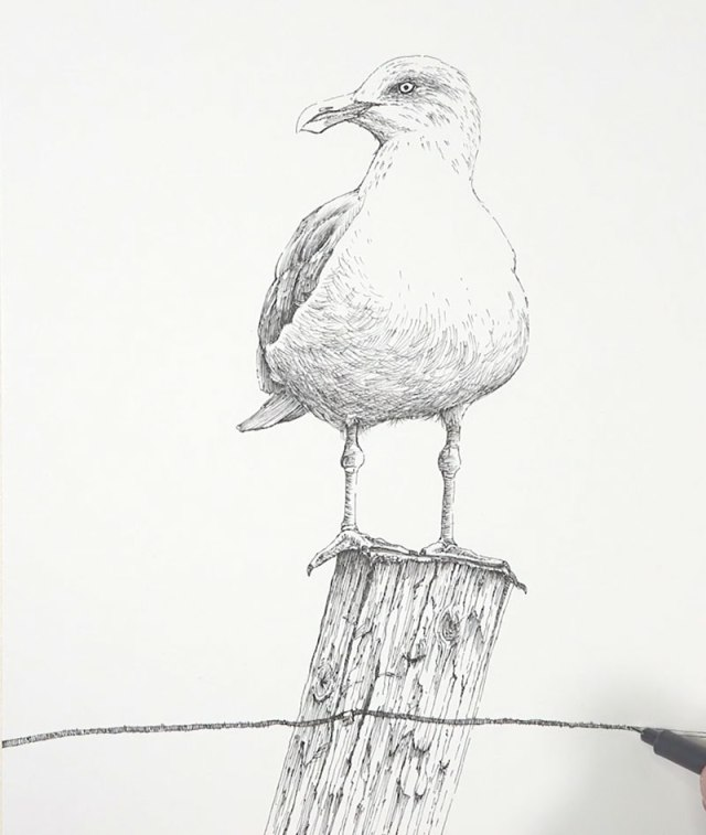 Pen and ink drawing of a seagull on a fence post