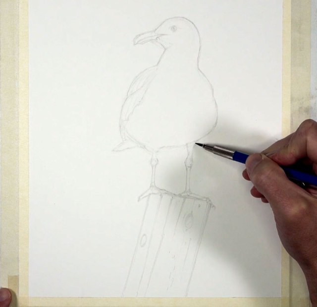 Pencil sketch of seagull