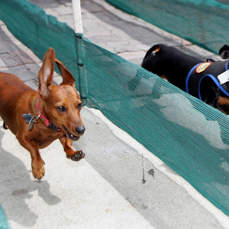 HB_Dog Races_2