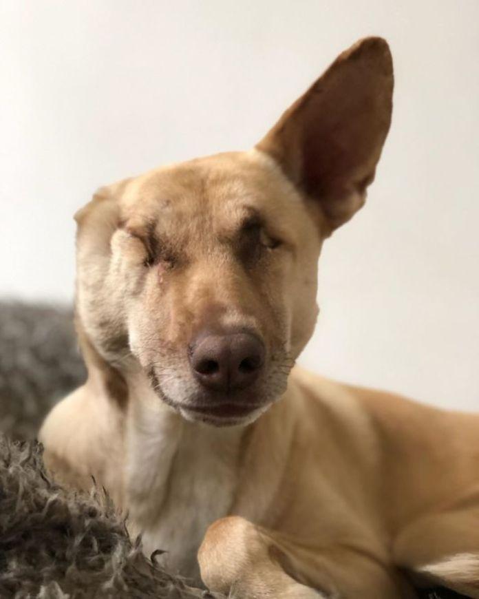 Maggie The Wonder Dog