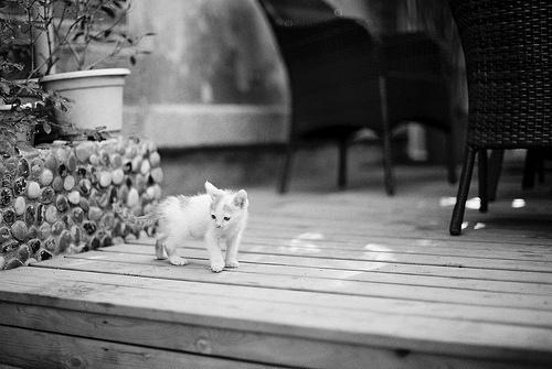 Kitten on Deck Photo