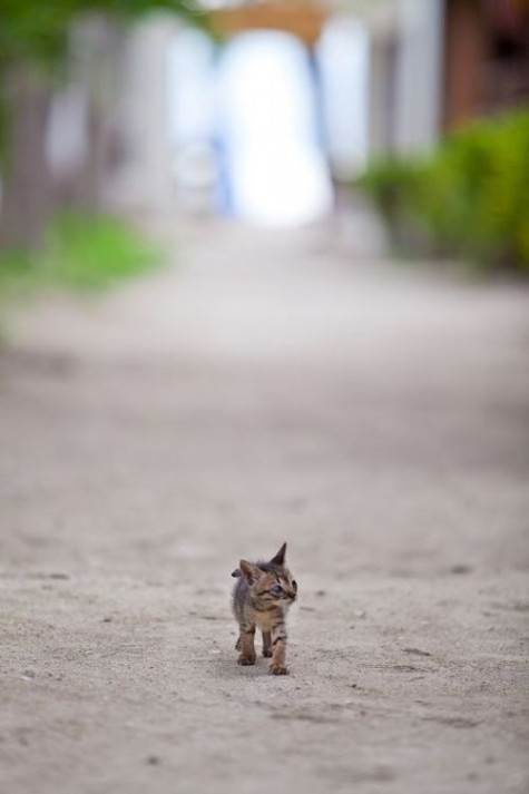 photo of kitten walking down a road by herself