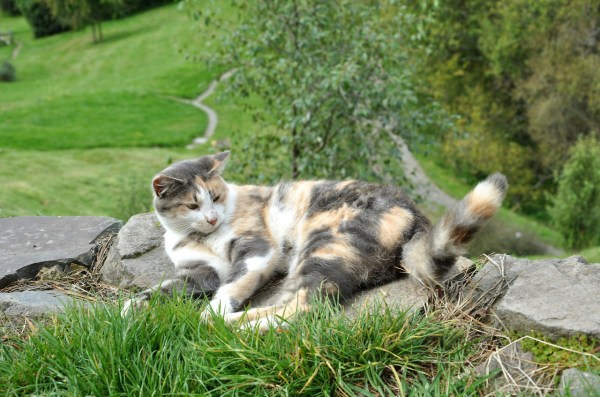 """Pickles: The Hobbit Cat"" from Hobbit Houses on Tumblr"