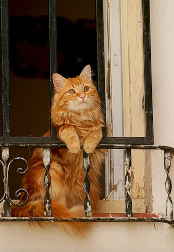 Cat at Window from Beautiful Portals Tumblr
