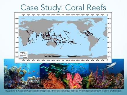 The World's Coral Reefs