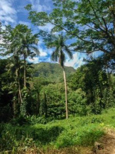 palm trees jungle hawaii island mountains