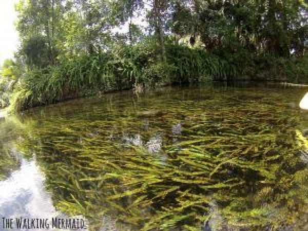 silver springs state park florida