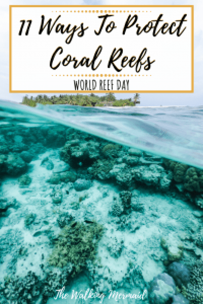 coral reefs water ocean beach protect environment awareness overlay
