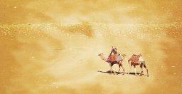 camel rider art