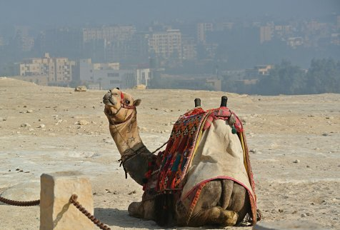 camel view