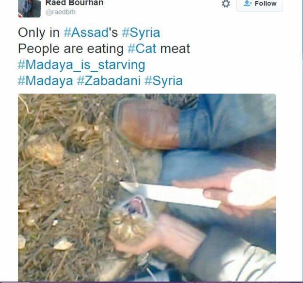 Raed Bourhan Times tweet
