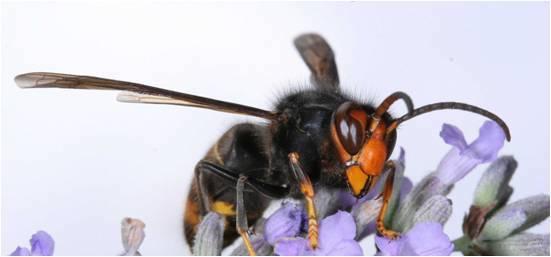 Bee Armageddon?