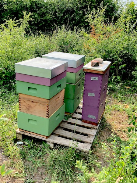 Hives at Apiary Two