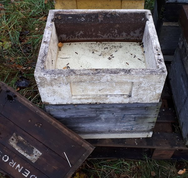 Feeding syrup in November (Denrosa Apiaries)