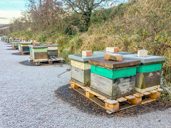 Over Wintering Smith Hives (Denrosa)