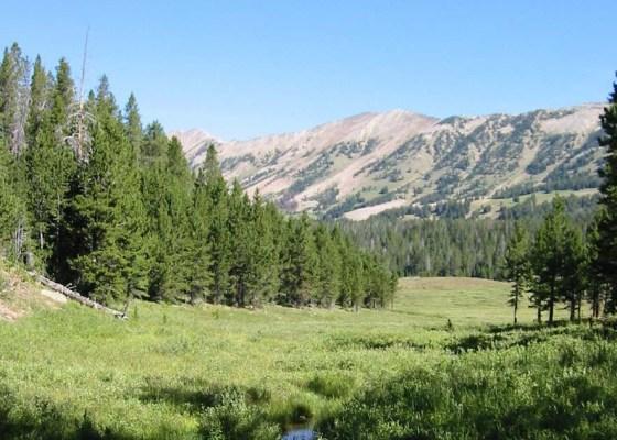 Montana Scenery