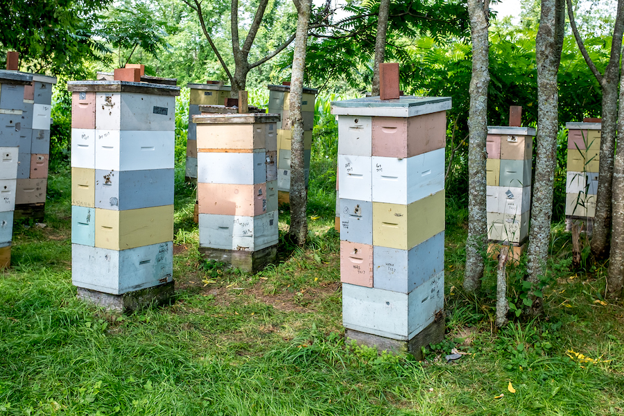 Lots of Nucs (Mike Palmer)