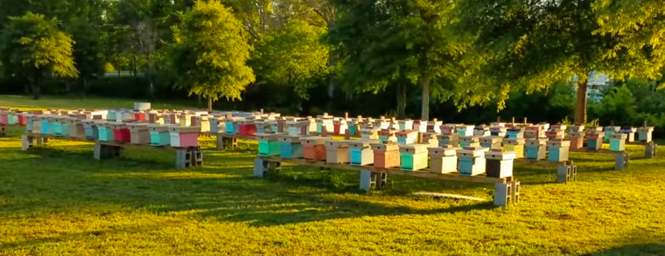 A Mating Apiary