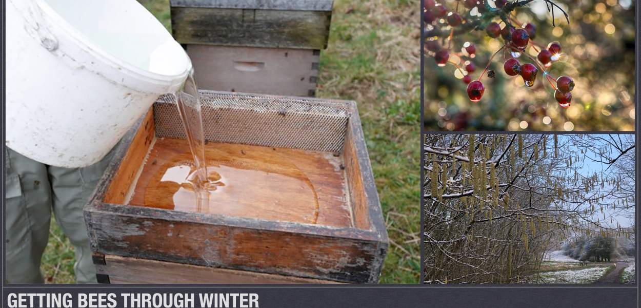 Getting Bees Through Winter