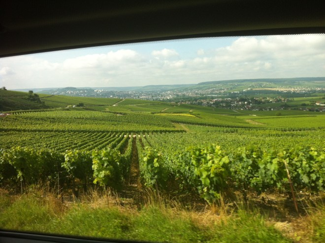 Vineyards in Countryside in Champagne France