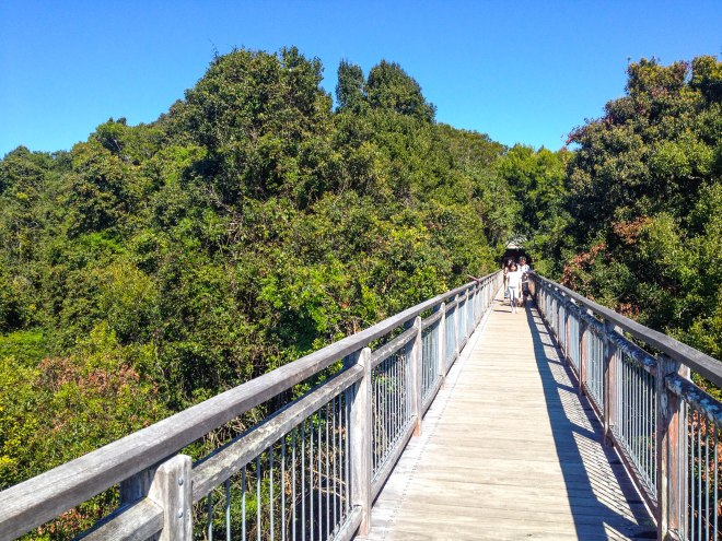 Dorrigo Skywalk, NSW Australia