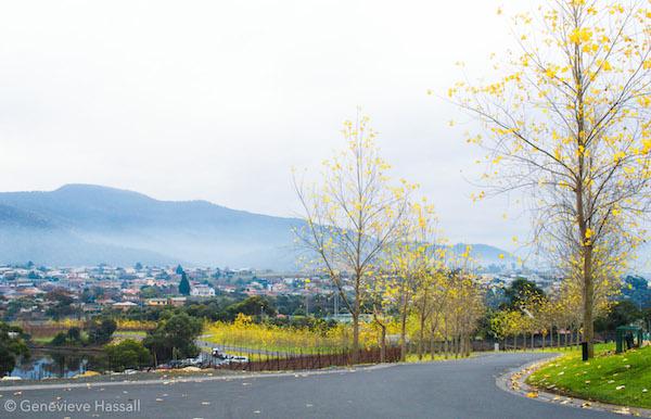 Moorilla Winery Hobart