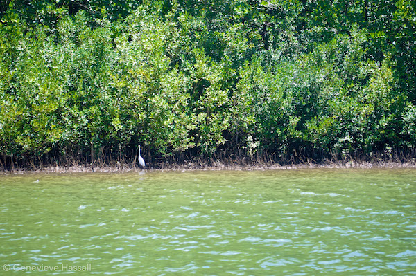 Daintree River Crocodile Cruise Queensland