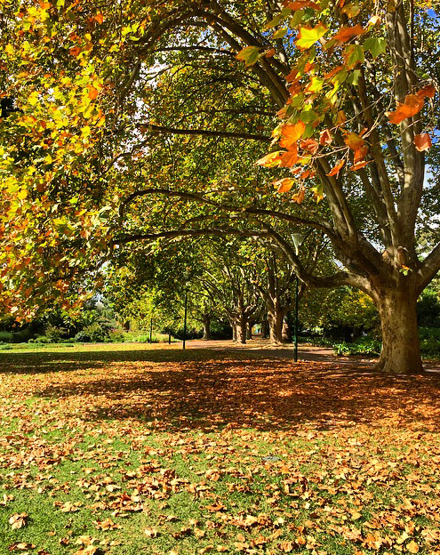Melbourne's Royal Botanic Gardens in Autumn