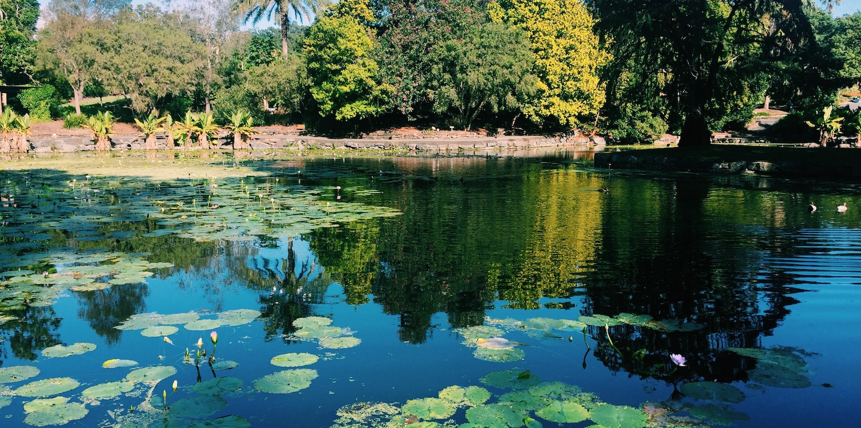 Photo of Brisbane Botanic Gardens lake