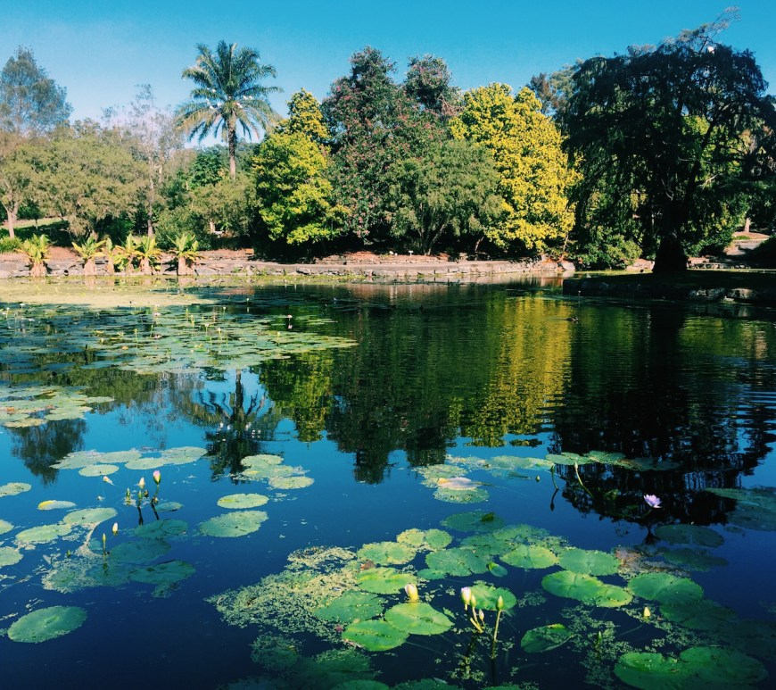 Photo of Brisbane Botanic Gardens lake