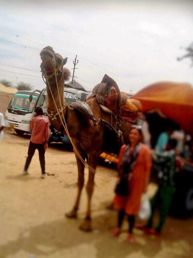 things to do in Pushkar | pushkar-camel-carriage