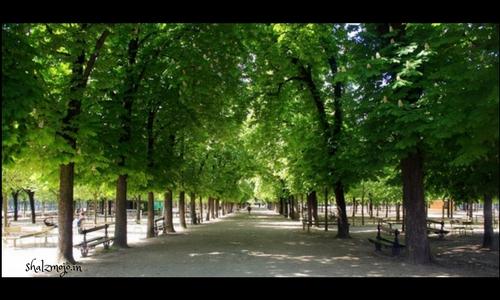 luxembourg garden2