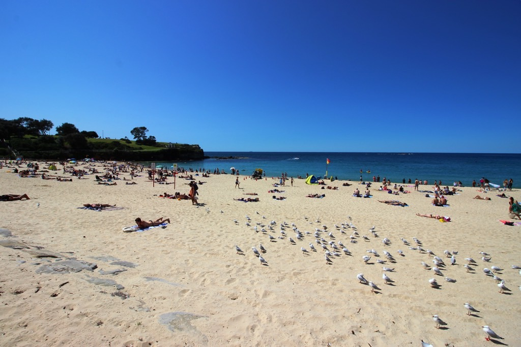 Bondi to Coogee Coogee Beach