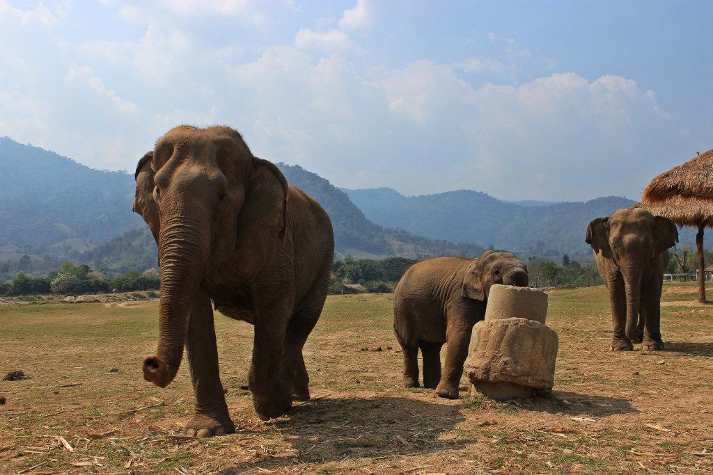 Elephant Nature Park Chiang Mai, route door Thailand