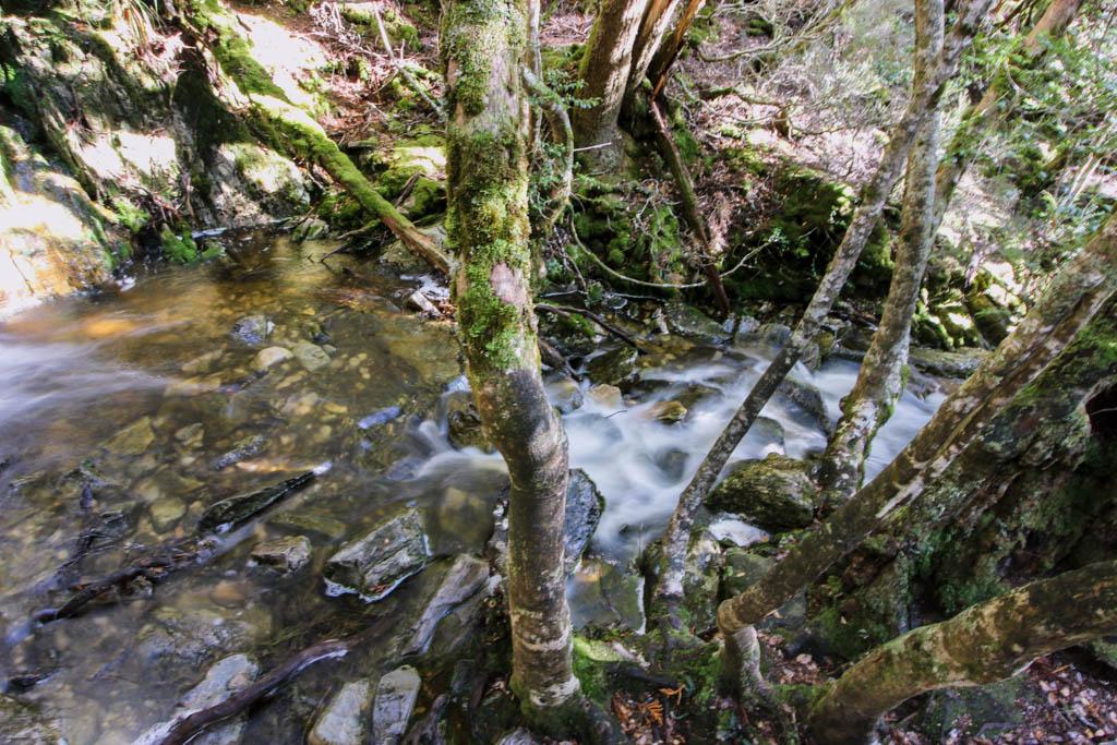 Waterstroom in het bos