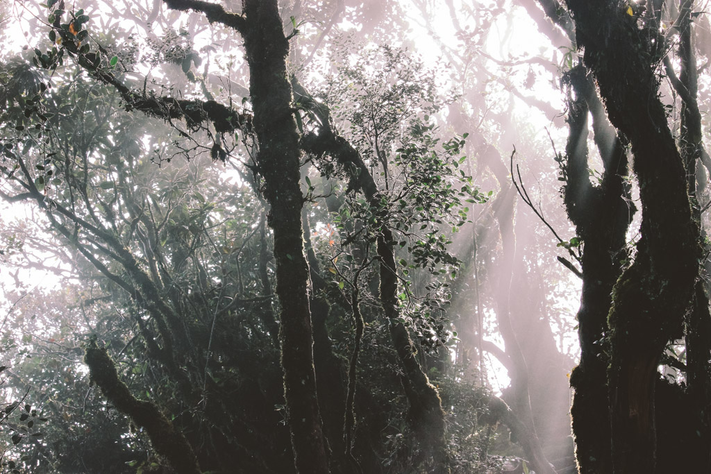 Mossy Forest | Cameron Highlands | Malaysia | Autumn | Nature | Forest