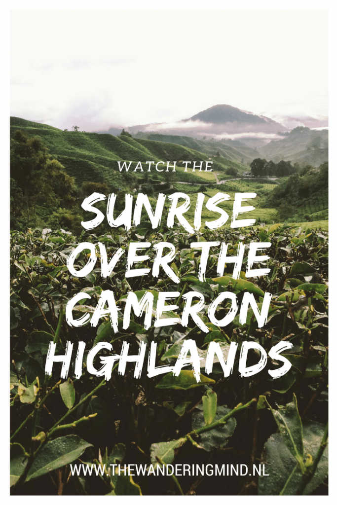 BOH | Tea Plantation | Cameron Highlands | Mossy Forest | Sunset Tour | Malayasia