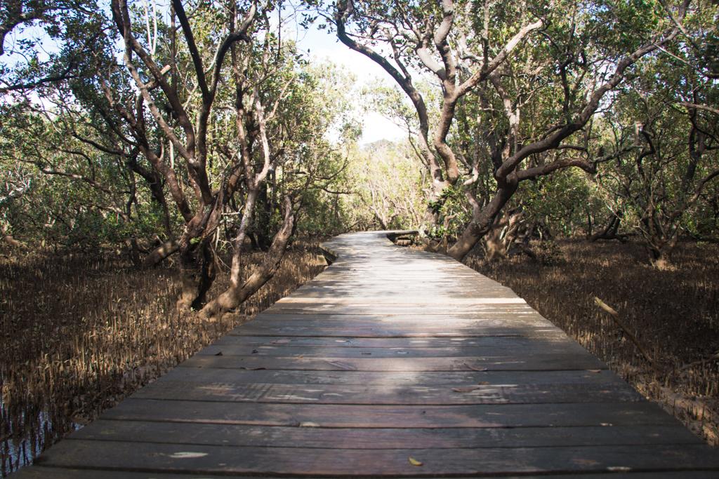 Mangrove Forest Bord Walk Paihia