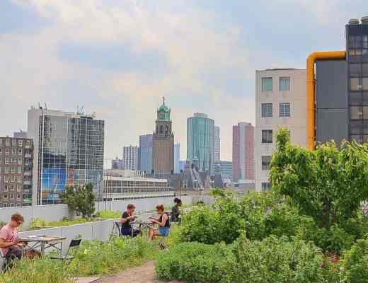Vegan in Rotterdam