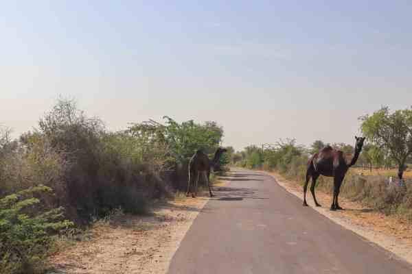 Homestay in Jodhpur Rural Rajasthan India Village