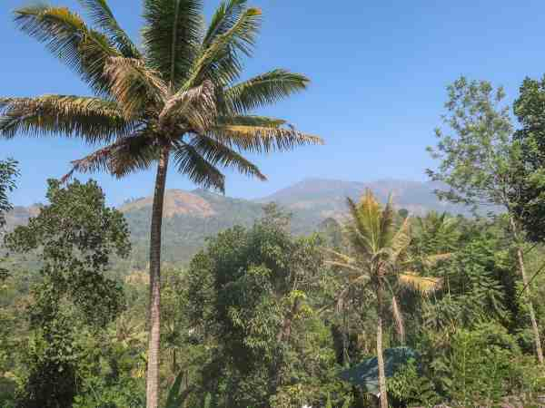 The Wayside Cottage Munnar