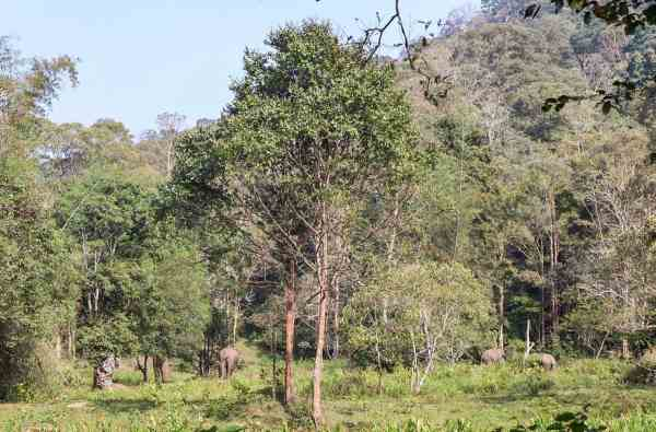 thekkady national park travel guide