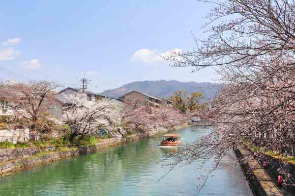 best place for Cherry Blossoms in Japan, Kyoto Canal Cherry Blossoms in bloom Japan